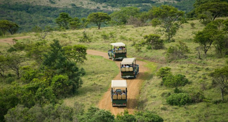 Premier Resort Mpongo Private Game Reserve Activities