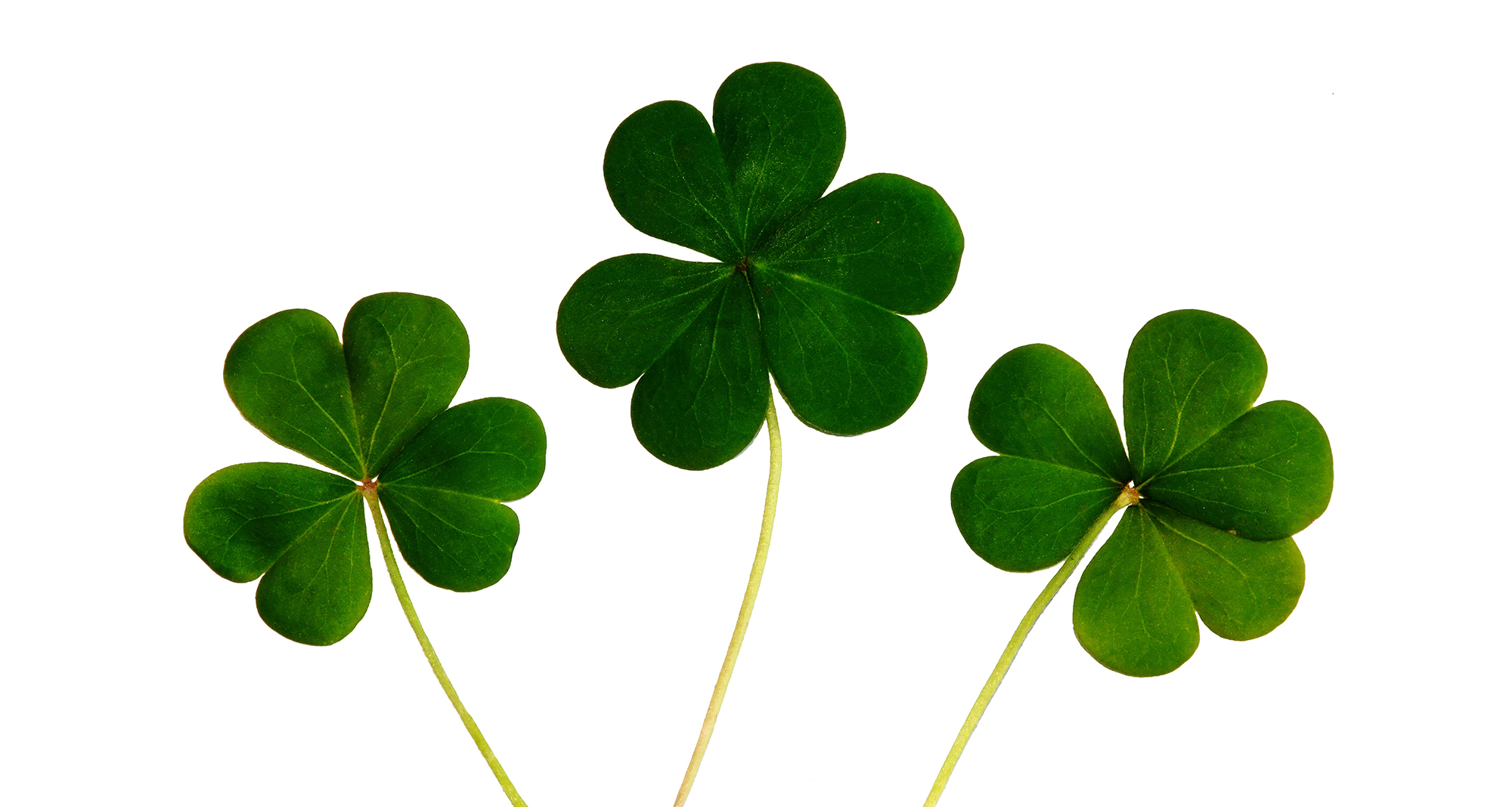 7 Good Luck Superstitions from Around the World | Premier Hotels