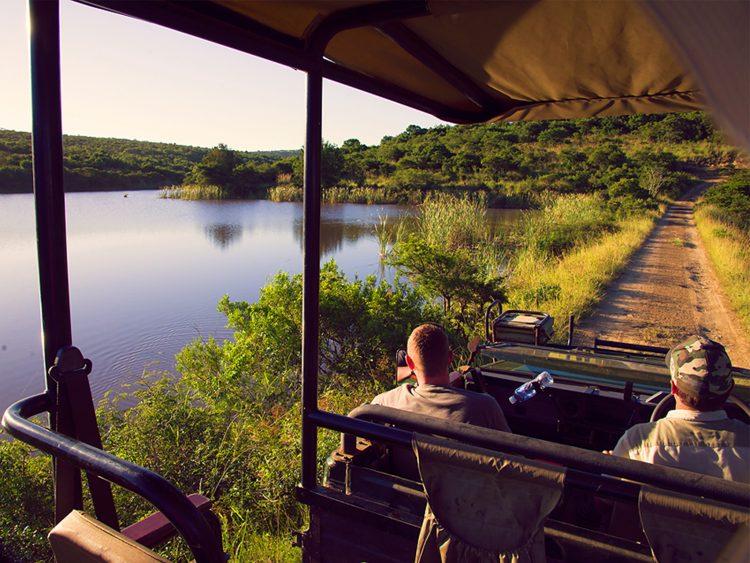 Lush safari