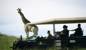 4 Tips for your South African Safari